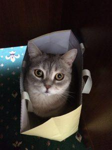 cat-515298_960_720