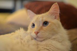 cat-560321_960_720