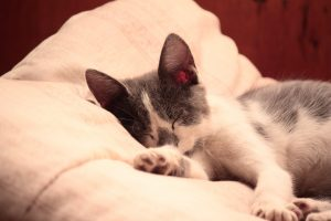cat-56256_960_720