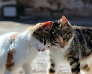 cat-582064_1280 (1)