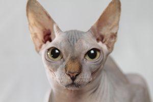 cat-629064_1280