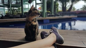 cat-721482_960_720