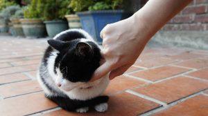 cat-75972_960_720