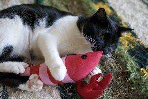 cat-804412_1280