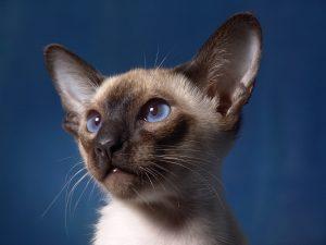 cat-806210_960_720