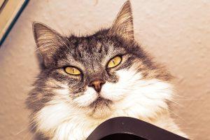 cat-81631_1280