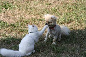 cat-83323_960_720