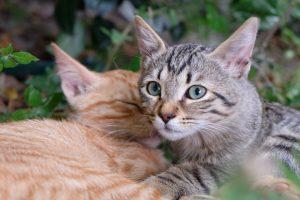 cat-935624_960_720
