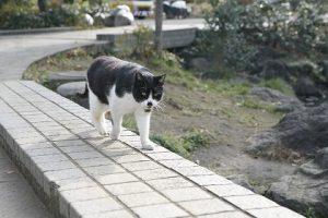 cat0043-001