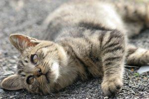 cat0098-066