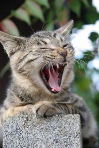 cat0101-066