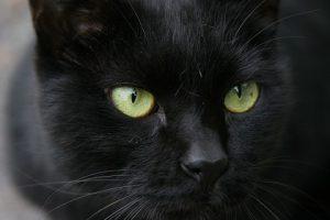 cat0110-066
