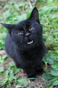 cat0111-066