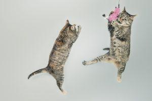 cats-558077_1280