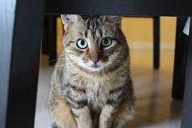 人気猫14