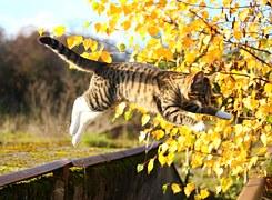唸る 猫7