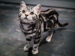 人気猫18