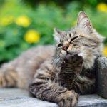 猫の年齢は見た目で判別できる?見分け方のポイントを紹介!