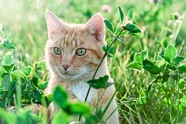 猫 寄生虫 人間4