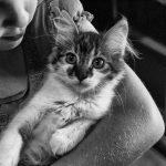 猫の去勢時期はメスの場合いつ?時期によって方法がちがう?
