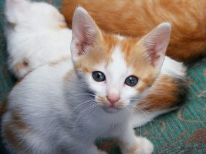 kitten-88418_960_720
