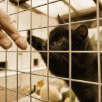 保健所が猫の駆除してくれない!野良猫と共存する方法とは?