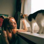 猫がくしゃみの時に出した鼻水に血が混じっている!原因は?