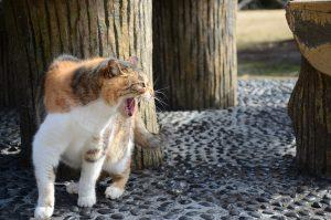 stray-cat-939367_1280