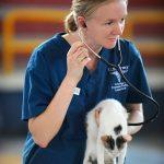猫の健康診断の費用はいくら?受ける頻度や項目で変わるの?