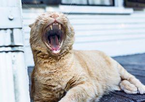 yawning-238487_960_720