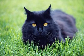 猫の柄 黒1