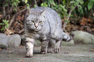 猫の柄 サバトラ3