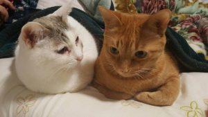 猫の柄 サバシロトビ3