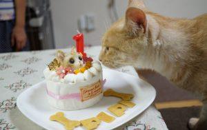 猫 誕生日42