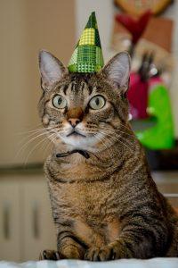猫 誕生日37