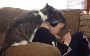 猫の行動12