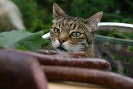 猫 玉ねぎ8
