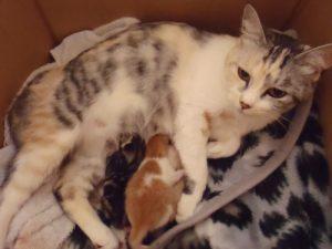 猫 出産9
