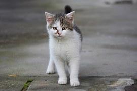 猫の行動13
