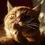 猫がストレスで自傷行為!気持ちを和らげる3つの方法とは?