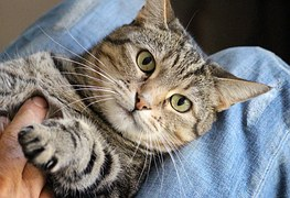 猫 自傷行為8