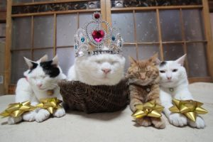 猫 誕生日16