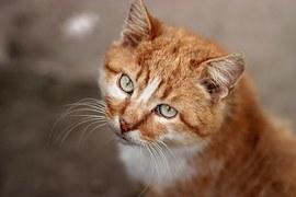 猫 玉ねぎ5