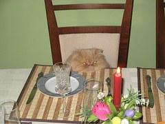 猫 誕生日2