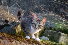 猫の柄 サバトラシロ3