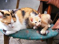 猫 出産5