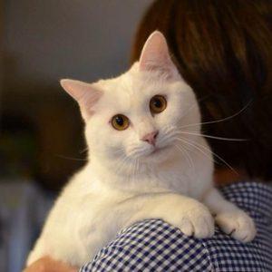 猫 なつく24