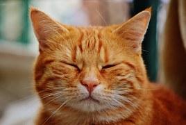 猫 玉ねぎ7