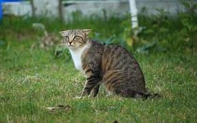 猫のしつけ 正しい方法2