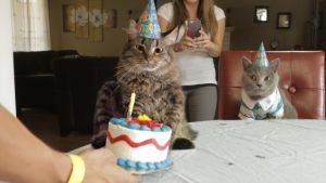猫 誕生日11
